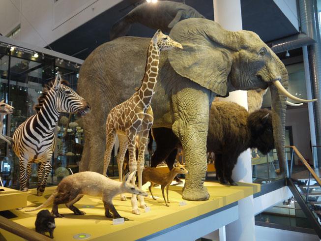 Naturalis dieren
